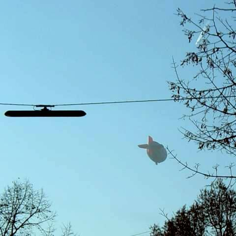 Zeppelin - live