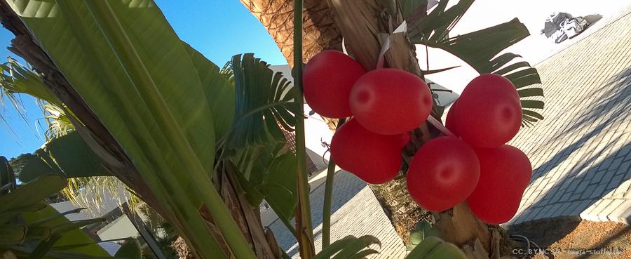 sonderbare Herz-Luftballons