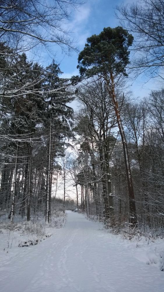 verschneiter Wald zw. Sindelfingen und Stuttgart