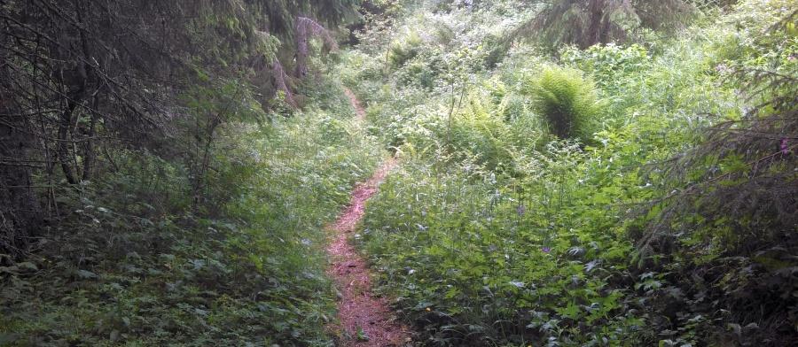 ein Wanderweg