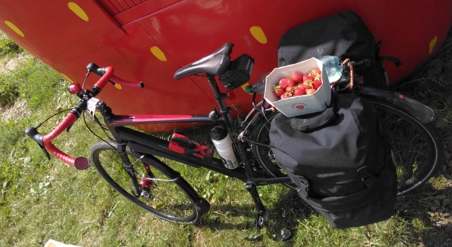 nochmal Erdbeeren mit einem Gespräch